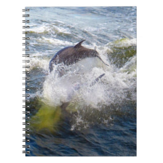 Dolphins Followings Boat Notebook