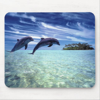 Dolphins Galore Mouse Pad