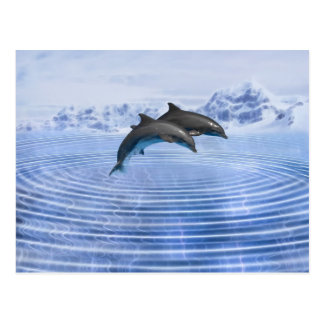 Dolphins in the clear blue sea post cards