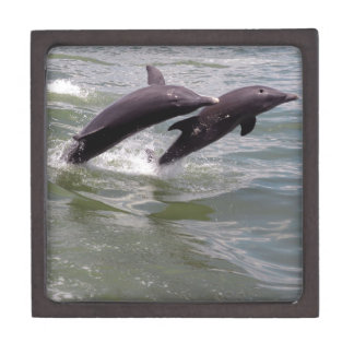 Dolphins Jewelry Box
