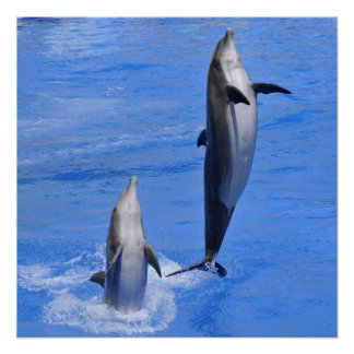 Dolphins jumping out of water posters