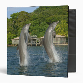 Dolphins jumping, Roatan, Bay Islands, 3 Ring Binder