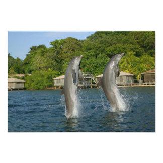 Dolphins jumping, Roatan, Bay Islands, Photo Print