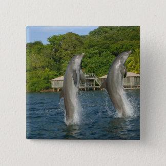 Dolphins jumping, Roatan, Bay Islands, Pinback Button