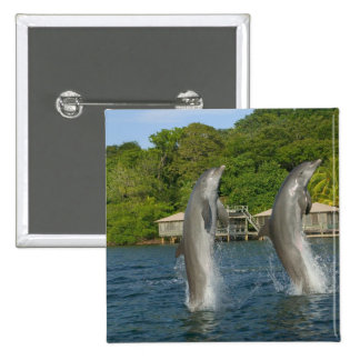 Dolphins jumping, Roatan, Bay Islands, Pinback Button