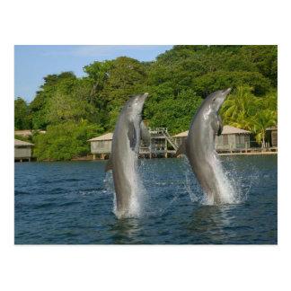 Dolphins jumping, Roatan, Bay Islands, Postcard