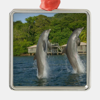 Dolphins jumping, Roatan, Bay Islands, Square Metal Christmas Ornament