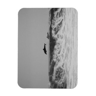 Dolphins jumping through waves in black & white magnet