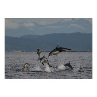 Dolphins Leaping Posters