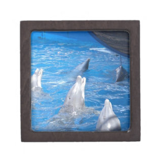 Dolphins Lovers Premium Gift Boxes