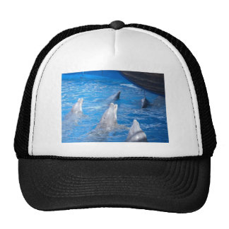 Dolphins Lovers Trucker Hat