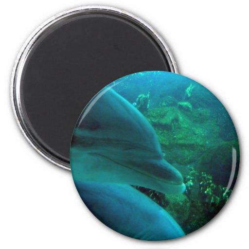 Dolphins Fridge Magnets