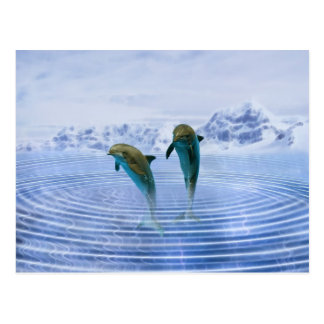 Dolphins make ripples postcard