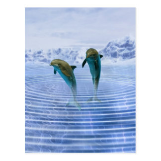 Dolphins make ripples postcard