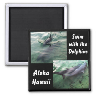 Dolphins of Hawaii Magnet