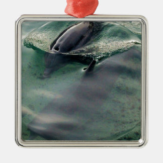 Dolphins of Hawaii Ornaments