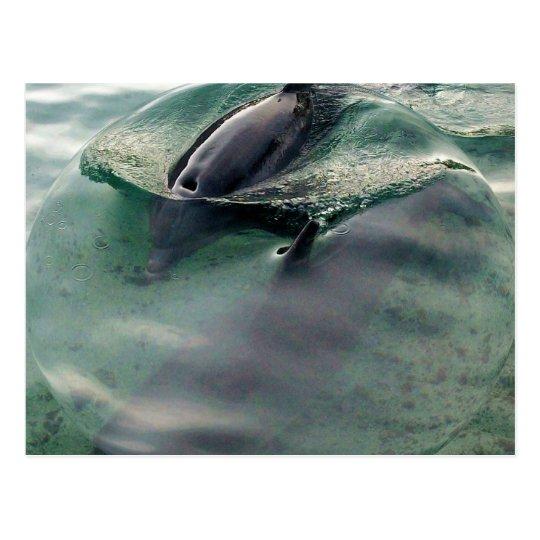 Dolphins of Hawaii Postcard