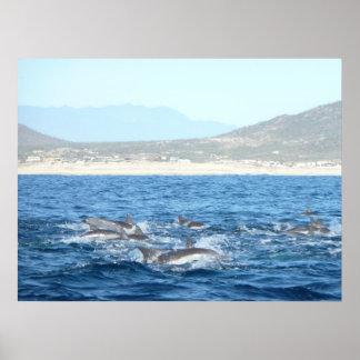Dolphins off San José del Cabo Poster