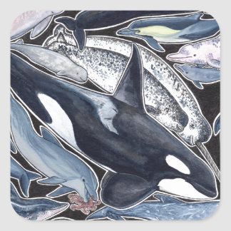 Dolphins, orcas, belugas and narvales square sticker