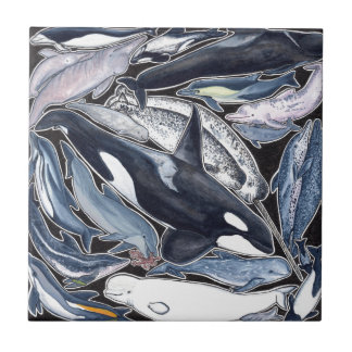 Dolphins, orcas, belugas and narvales tile