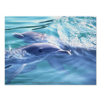 Dolphins Photography Poster