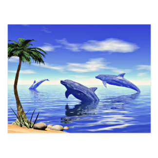 Dolphins Postcard