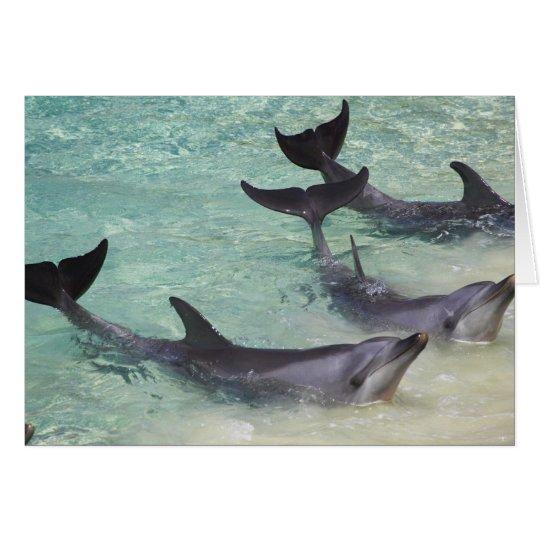 Dolphins, Sea World, Gold Coast, Queensland, Card