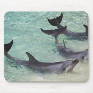 Dolphins, Sea World, Gold Coast, Queensland, Mouse Pad