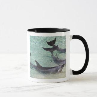 Dolphins, Sea World, Gold Coast, Queensland, Mug