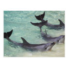 Dolphins, Sea World, Gold Coast, Queensland, Postcard