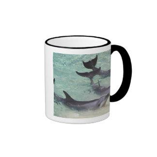 Dolphins, Sea World, Gold Coast, Queensland, Ringer Mug