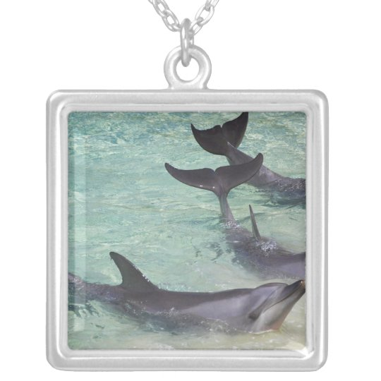 Dolphins, Sea World, Gold Coast, Queensland, Silver Plated Necklace
