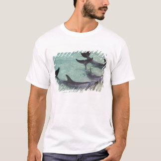 Dolphins, Sea World, Gold Coast, Queensland, T-Shirt