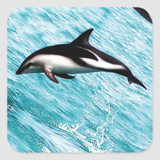 Dolphins Square Sticker
