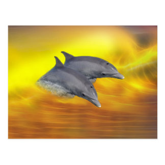 Dolphins surfing the waves postcard
