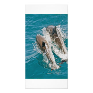 Dolphins Swimming Free in the Pacific Ocean Picture Card