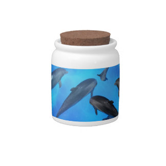 Dolphins swimming in the ocean candy jar