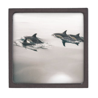 Dolphins Swimming Jewelry Box