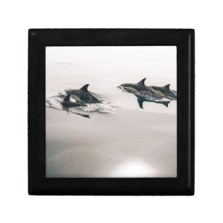 Dolphins Swimming Keepsake Box