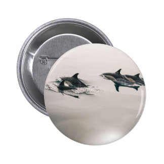 Dolphins Swimming Pinback Button