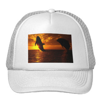 Dolphins Symphony at Sunset Hat
