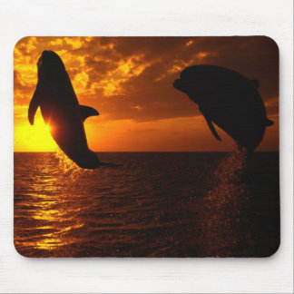 Dolphins Symphony at Sunset Mousepads