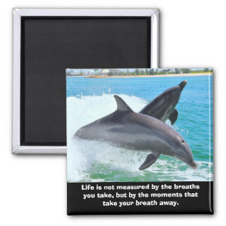 Dolphins Take Your Breath Away Magnet
