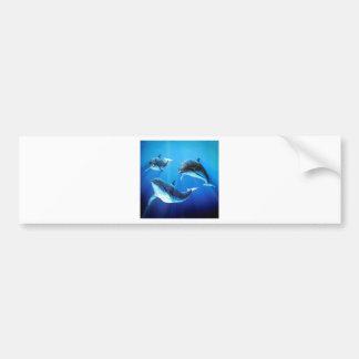 Dolphins Trio Bumper Sticker