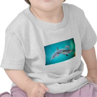 Dolphins Tee Shirts