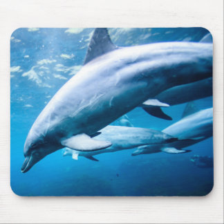 Dolphins Underwater Mouse Pad