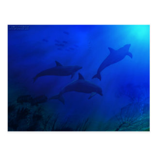 DOLPHINS UNDERWATER POST CARDS