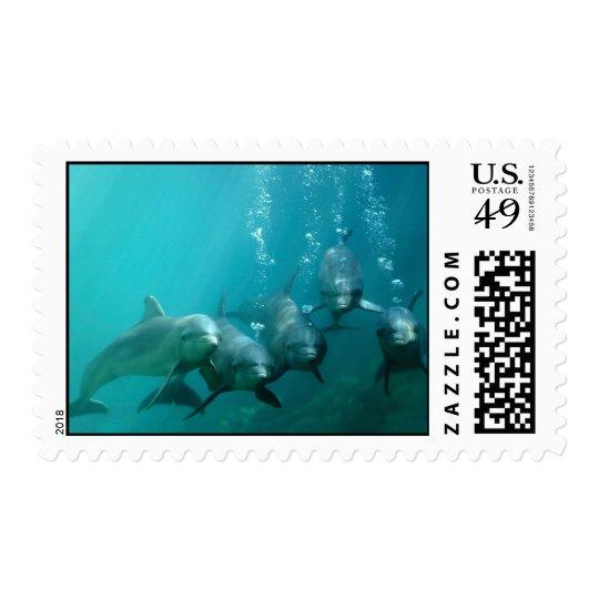 Dolphins Underwater Postage