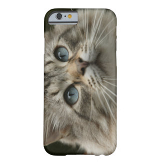 Domestic cat barely there iPhone 6 case