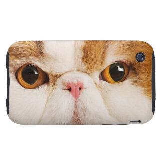 Domestic cat. Calico Harlequin Persian. Close up Tough iPhone 3 Cover